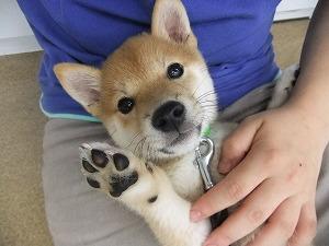 子犬は可愛いですが…
