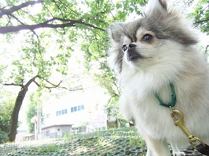 9月4日 人と犬の住みやすい地域づくり